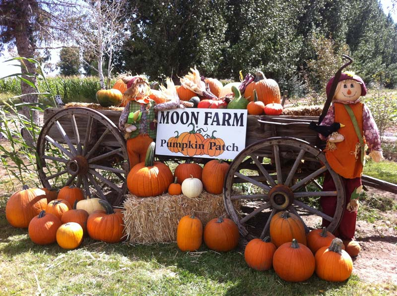 100 Pumpkin Patches Around Colorado Springs